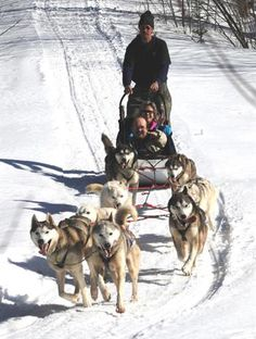 Dog Sledding, there was a time when I thought my life wouldn't be complete with out a team of my own. No joke