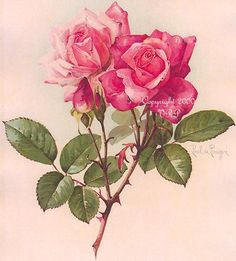 Paul DeLongpre - 2 Pink Roses