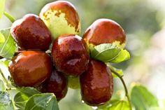 How Many Almonds Dates Walnuts