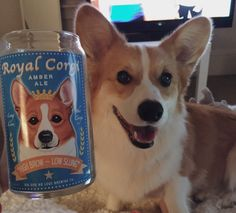 he certainly believes that he's a royal corgi