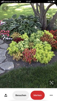 Cheap Landscaping Ideas, Florida Landscaping, Front Yard Landscaping, Acreage Landscaping, Fence Ideas, Outdoor Landscaping, Outdoor Plants, Shade Garden, Garden Plants