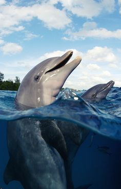 Bottlenose dolphins Photo by Stephen Frink on Getty Images
