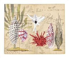 Shells with Sea Grass by Harrison Howard.