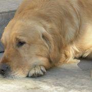 354 Best Animal Love Images On Pinterest Fluffy Animals Dog Cat