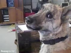 Talking Dog Loves to Talk..I laugh so freakin hard every time i see this!!!!