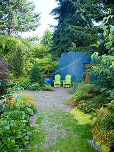At the back of a residential organic garden north of Seattle, a gravel path leads to a sitting area furnished with two chartreuse green Adirondack chairs, a lace leaf Japanese maple in an azure-glazed pot, and backed by a roughly 9 foot tall matching azure blue wall, reminiscent of a Caribbean patio, that provides color at the back of the garden as well as privacy from a storage area behind.