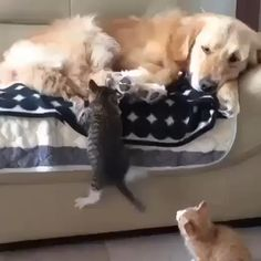 Cute Animals Coloring Pages Free both Cat Giving Birth To Kittens Dream Meaning within Cute Baby Animals And Pictures nor Cute Baby Animals Videos Compilation Cute Moments Cute Funny Animals, Cute Baby Animals, Animals And Pets, Cute Cats, Anime Animals, Small Animals, Funny Cats, Cute Animal Videos, Cute Animal Pictures