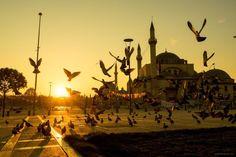 Tauben scharen sich früh am Morgen an den Rasenflächen der Selimiye-Moschee in Konya
