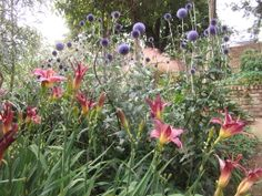 Informal perennials add height and colour with this Echinops and Hemerocallis in July.