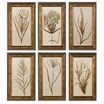 Wheat Grass by Grace Feyock 6 Piece Framed Painting Print Set