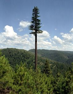 Antenas disfarçadas de árvores
