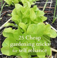 25 Cheap gardening tricks for self reliance sm
