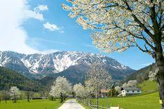 Snowy Mountain, Puchberg am Schneeberg, Austria