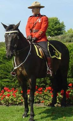 World-famous Canadian Mounted Police.-a lovely addition to our earth! Canadian Things, I Am Canadian, Canadian History, Police, Hot Cops, Canada Eh, Cool Countries, Canada Travel, Law Enforcement