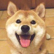 柴犬, Shiba Inu. <3 ~lisa
