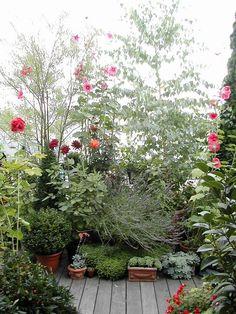 Blog de terrasse :UN JARDIN SUSPENDU A PARIS, Un jardin en pots