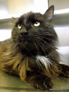 Zachary - senior black long-haired