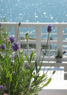 The lavender, sun on the water, sun diamonds, beach, summer all equal happiness.