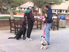 Walk on Loose Leash, Part 1: Choose the Right Walking Pace and Make It Clear Pulling Doesn't Work | Animal Behavior and Medicine Blog | Dr. Sophia Yin, DVM, MS