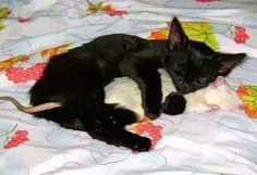 Baráttal alvó macskák - Macskaőrség