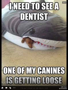 It's FUNNY FRIDAY! Another hilarious funny meme! Click the picture to see 100 more Funny Friday pictures! Haha Funny, Funny Cute, Funny Dogs, Funny Memes, Funny Stuff, Freaking Hilarious, Funny Dentist Memes, Puns Jokes, Awkward Funny