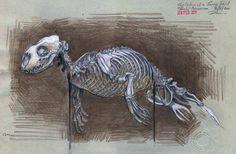 Seal Skeleton Pencil study / Bristol Museum 2011 UK Artist: Duncan Cameron