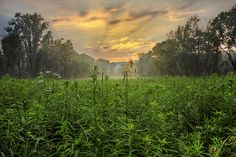 Black River Wildlife Reserve by MDiCola Photography on Flickr.