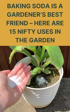 Garden Yard Ideas, Lawn And Garden, Garden Projects, Garden Fun, Green Garden, Outdoor Projects, Outdoor Ideas, Gardening For Beginners, Gardening Tips