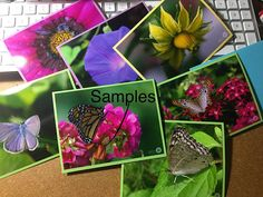 Four 4 Nature / Dragonfly Photo Note Cards 4.25 x