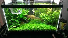 10 Gallon Half Dutch/Half Iwagumi? - The Planted Tank Forum