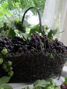 ♡♡ Fabulous! ♡♡. Wire basket of grapes. Gorgeous summer decorating centerpiece with Tuscan flair.