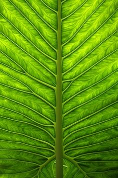 Colour inspiration green - close up of a leaf