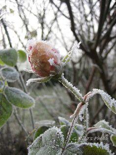 Winter garden, via Flickr.