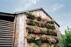 Vertical gardening ideas - CountryLiving.com