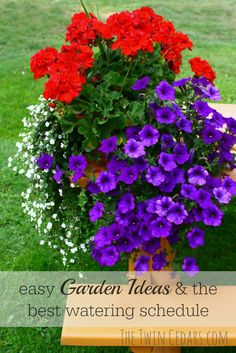See amazing before and after photos from spring to summer plants. Includes a pin. See amazing before and after photos from spring to summer plants. Includes a pin it image for an easy watering and fertilizing schedule. Outdoor Flowers, Outdoor Planters, Garden Planters, Geranium Planters, Full Sun Planters, Planter Pots, Fall Planters, Outdoor Gardens, Container Flowers