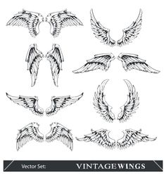 Set of wings vector 558733 - by morys on VectorStock®