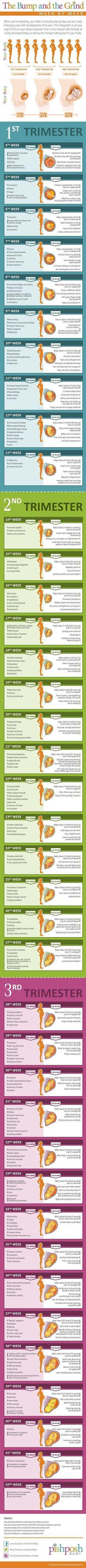 Pregnancy Decisions, Maternity, Trimester, Advice and Tips #pregnancytrimesters #pregnancytips #pregnancyadvice