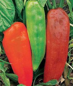 Burpee Sweet Pepper Corno Di Toro 51913 (Green to Red) 25 Seeds David's Garden Seeds http://www.amazon.com/dp/B00HLQO8RW/ref=cm_sw_r_pi_dp_DsWRtb1S0SDVYD7K