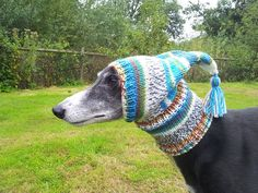 """Do you think this makes my nose look big?"" Greyhound/Galgo Pixie Hat"