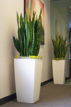 ...Lechuza Cubico planters.