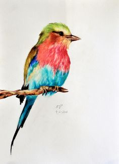 Exotic Bird 5 - Original Coloured pencil drawing