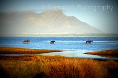 Wild horses of South Africa. Eternal Sunshine, My Land, Wild Horses, Landscape Photos, South Africa, Waves, African, Mountains, River Blue