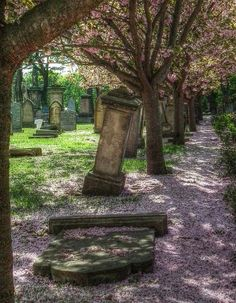 Petals shower a toppled headstone in Grangetown cemetery, Sunderland, England Photo by Sophie