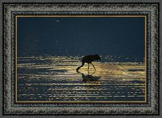 Nature Print featuring the photograph Sandhill Crane And Light Rings by Jeff…