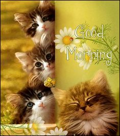 Cute Cats And Kittens Good Morning Quote cats adorable kitten sunflowers good morning quotes cute good morning quotes beautiful good morning quotes Happy Good Morning Quotes, Good Morning Friday, Morning Quotes Images, Good Morning Funny, Morning Pictures, Good Morning Wishes, Good Morning Greeting Cards, Morning Greetings Quotes, Morning Memes