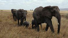 The Ultimate Family Safari experience. Visit www.africanwellnesstravel.com