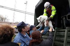 Still in Little Ferry, another dog is saved by rescuers. Photo: AFP PHOTO / Mehdi Taamallah