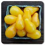 #highmowingseeds Organic Yellow Pear Tomato