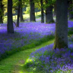 "I hope you all had a good weekend. Tonight lets pin a lovely ""Woodland Garden"" in shades of blues/purples."