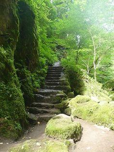 Au Pas de Cère, entre Vic sur Cère et Thiézac Milan, Beautiful Stairs, Amiens, Staircases, Garden Bridge, Outdoor Structures, France, Pictures, Forests